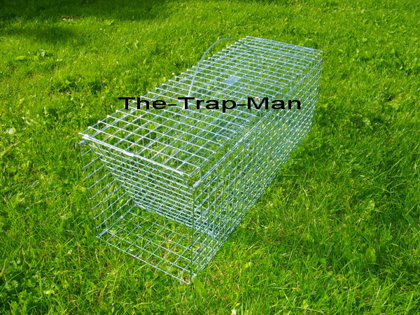 Wood Pigeon Trap Trap To Catch Wood Pigeon